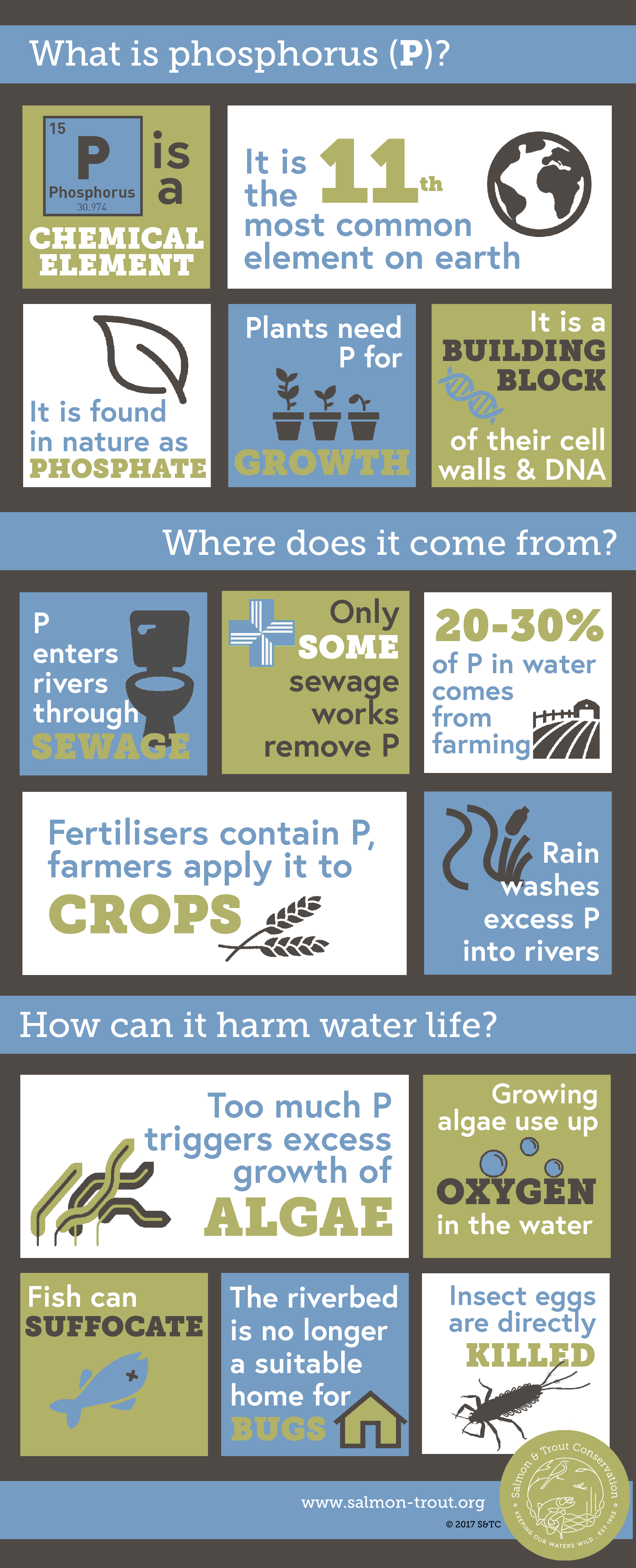 Phosphorus Infographic