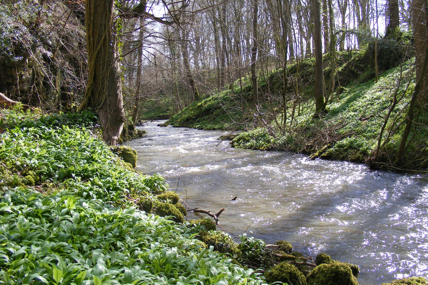 Salmon & Trout Conservation welcome River Alyn to SmartRivers programme