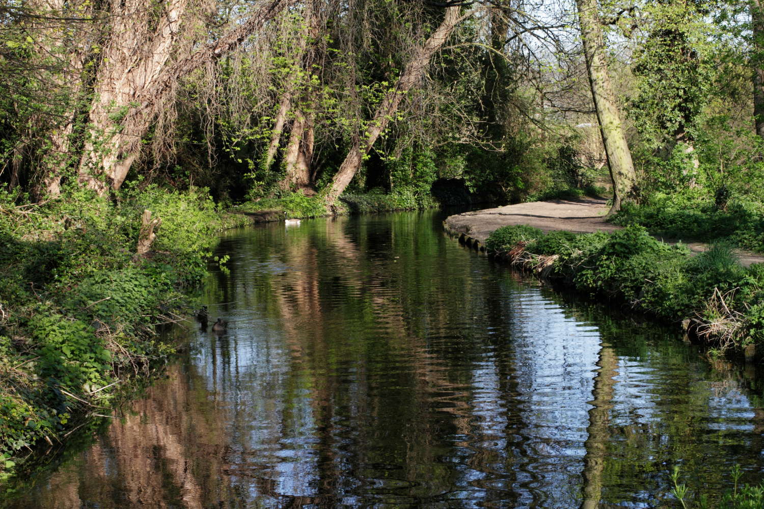 River Wandle. Phone copyright: Getty Images.