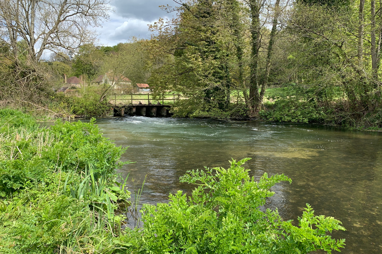 The River Avon. Photo credit: Salisbury and District Angling Club