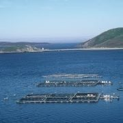 Scottish fish farm